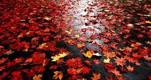 اس ام اس و شعرهای زیبا ، عاشقانه و تنهایی درباره فصل پاییز و خزان
