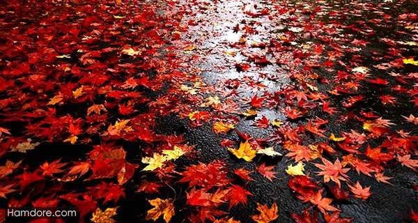 اس ام اس پاییز,sms fasle payiz,فصل پاییز,hs hl hs \hddc