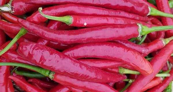 خواص فلفل قرمز,خواص فلفل,فلفل قرمز,tgtg rvlc,chili peper,red pepers